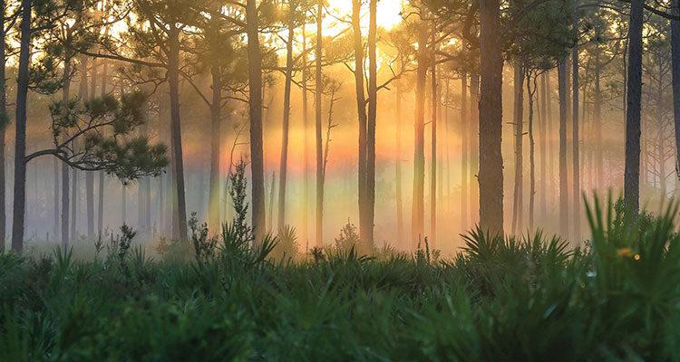 Jonathan Dickinson State Park by Benji Studt