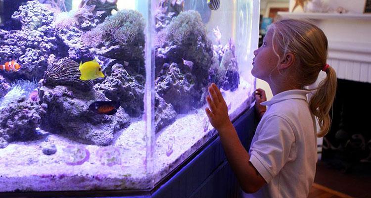 Sandoway Discovery Center Delray Beach