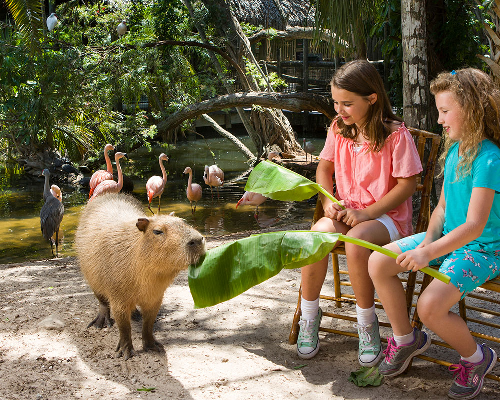"Head to Palm Beach Zoo for a ""Happy Capy"" Experience and more!"