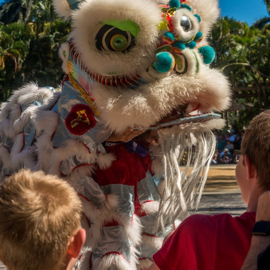DragonFest: Chinese New Year