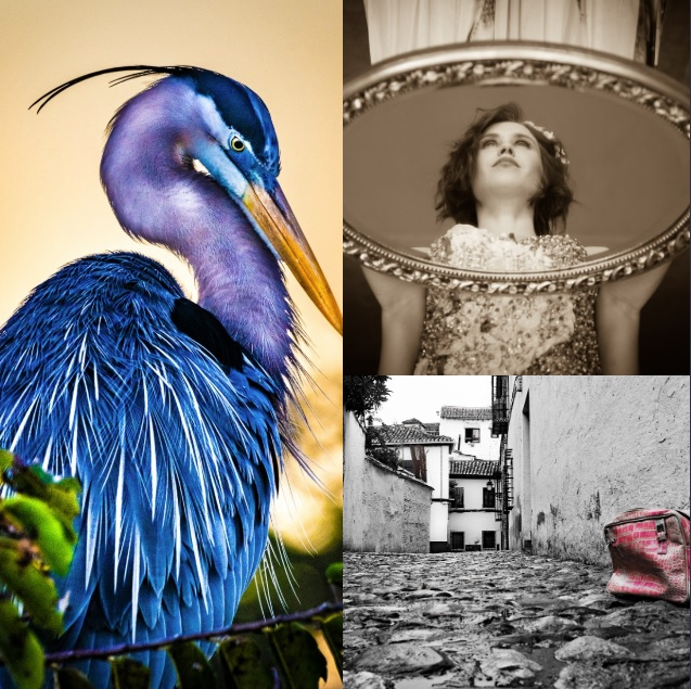 Palm Beach Photographic Center's 23rd Annual Members' Juried Exhibition